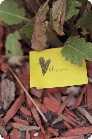 Ava garden note hazey