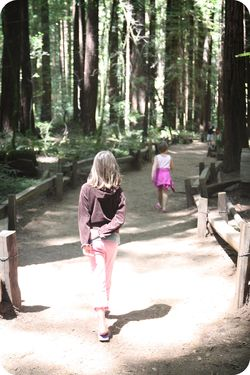 Redwood path 2