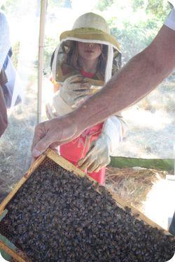 Fair bees tent