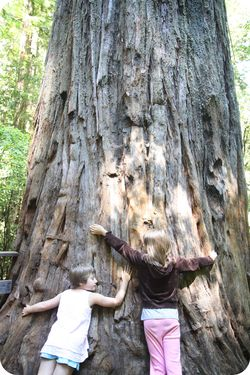 Redwood treehuggers