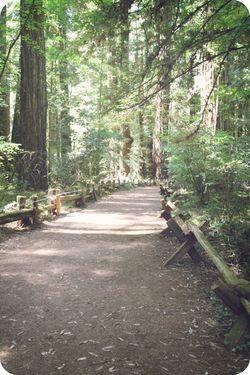 MM path