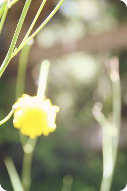 MM quiet afternoon blur flower