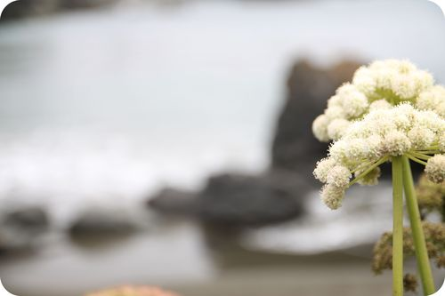 MM flower ocean bokeh