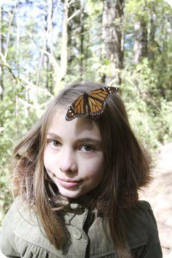 Mckaylah butterfly