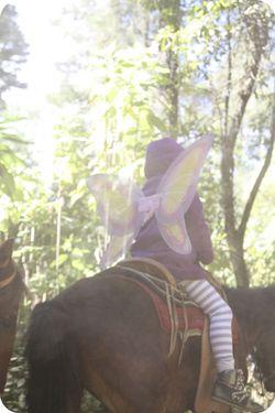 Ava horse