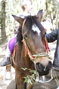 Ava horse 2
