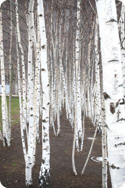 Trees tate Modern