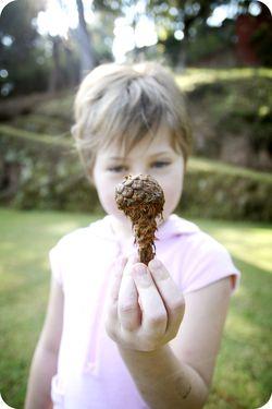 Ava pine cone 2