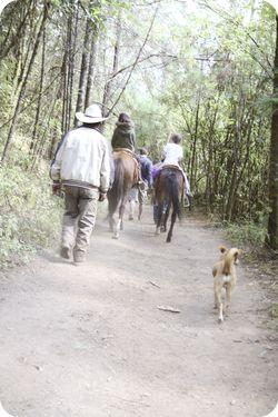 Horse hike