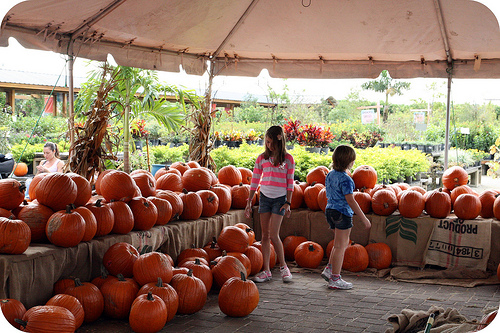 Pumpkin patch 2011 2