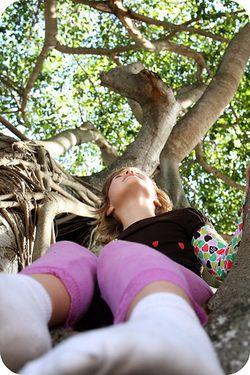 Tall tree a