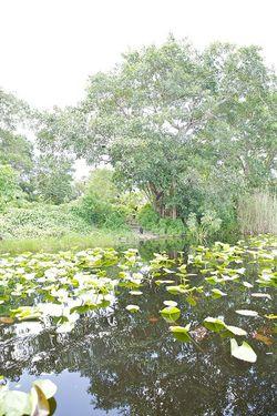 Glades glades