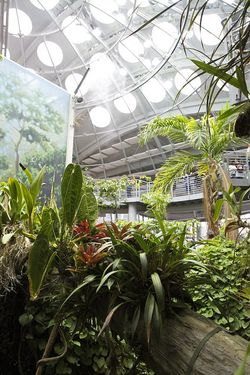 Summer cali science dome rainforest