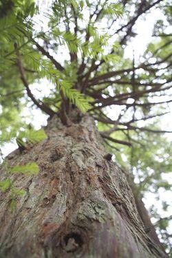 Summer gg park treeside