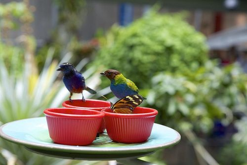 Summer cali science bird feeder