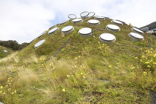 Summer cali science living roof