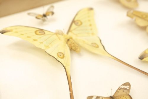 Summer cali science butterfly yellow