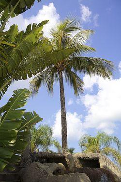 LDW palm tree