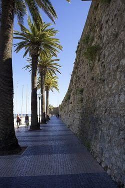 Portugal palm street