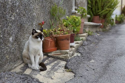 Portugal Mr Kitty