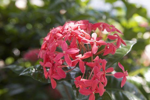 LDW pink flower