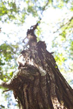 Secret woods tree trunk