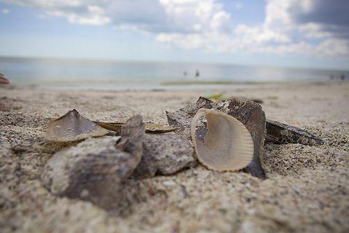 LDW shells close