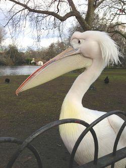London 13 park big bird