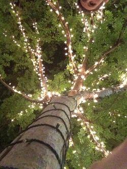 Insta 3 lit tree (1)