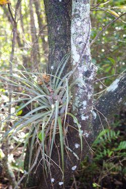 Secret woods airplant