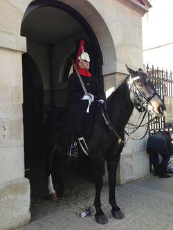 London 13 guard horse
