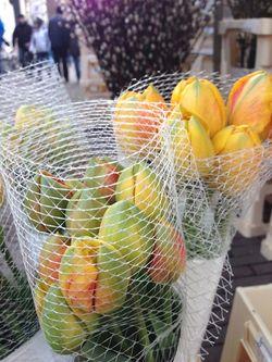 London 13 Am tulips
