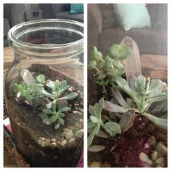 House terrarium test