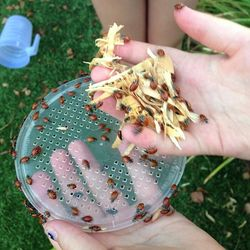 House ladybug test