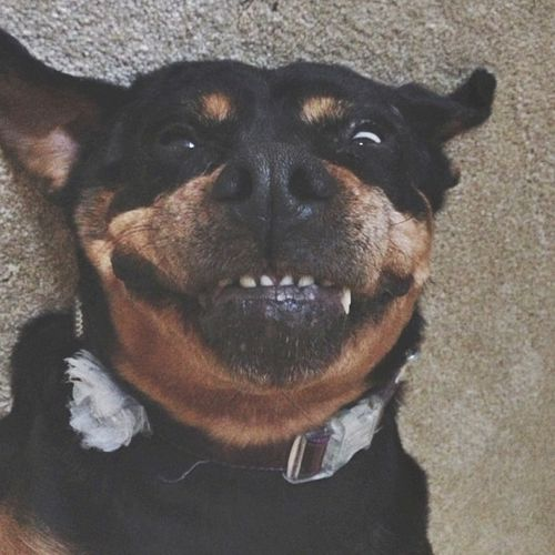 Insta Selina smile
